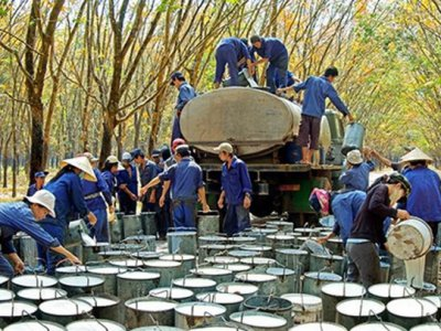 Exporting rubber is expected to meet many difficulties